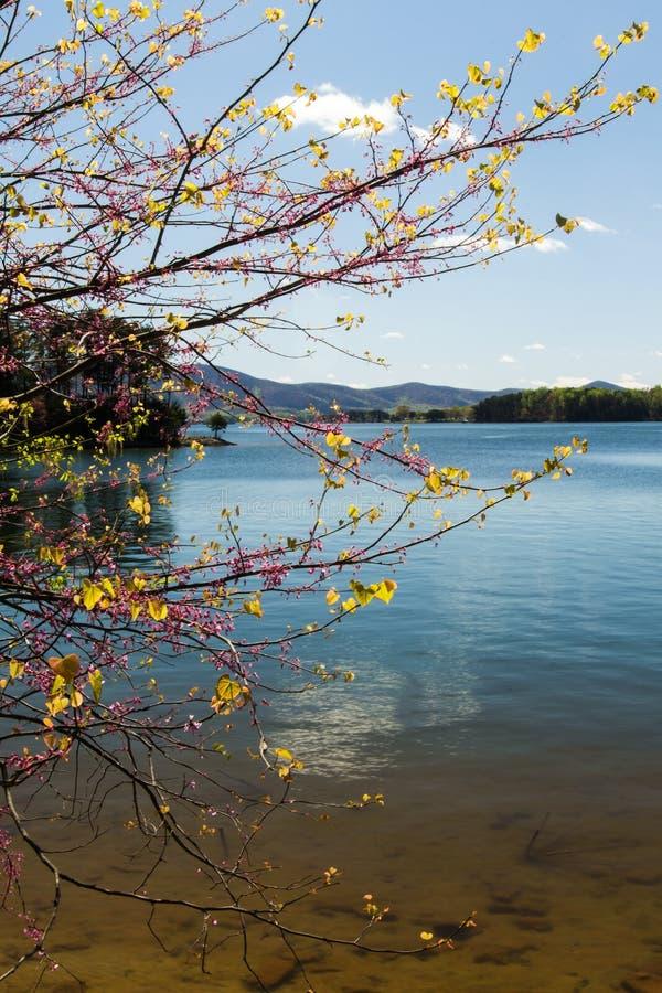 Redbud Tree, Lake and Montain stock photo
