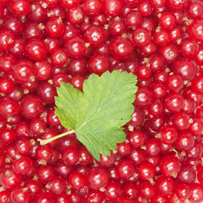 Download Redcurrant stock image. Image of berries, nobody, many - 20999547