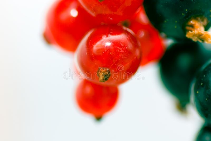 Download Redcurrant And Blackcurrant Stock Photo - Image: 2762402