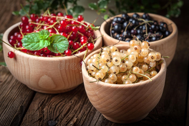 Redcurrant, blackcurrant, white currant fruit. royalty free stock photo