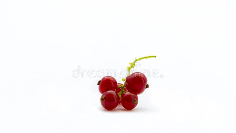 Redcurrant isolated on a white background. Juicy red currant with green twig.  stock photo