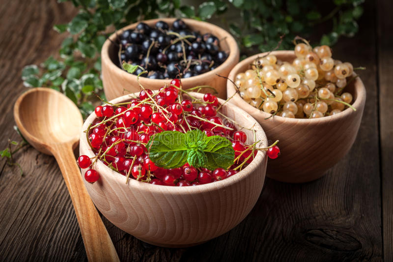 Redcurrant svart vinbär, frukt för vit vinbär arkivfoto