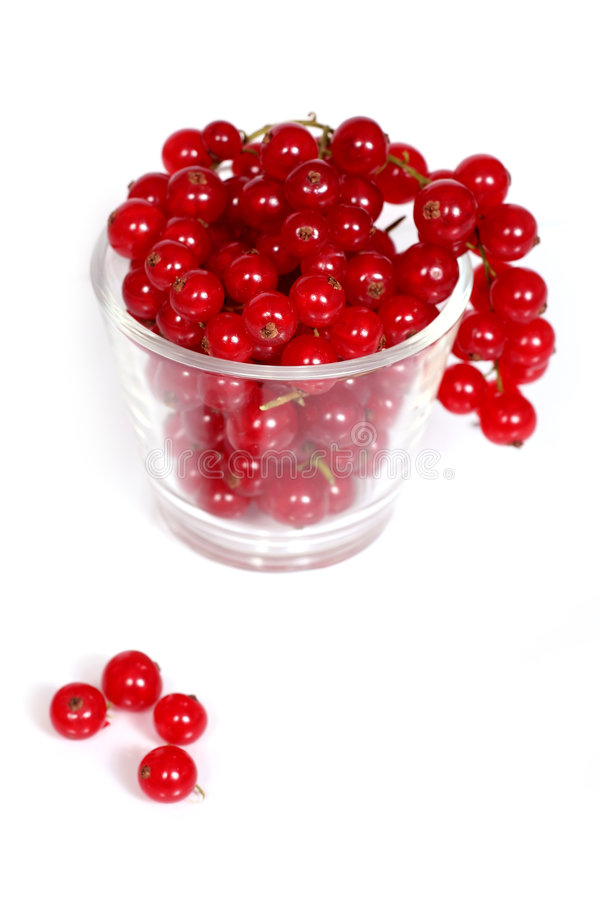Free Redcurrants Royalty Free Stock Photography - 1056987
