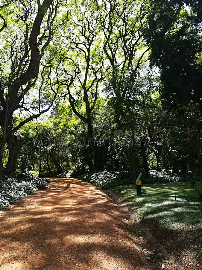Path of stone bedecked with trees stock photo