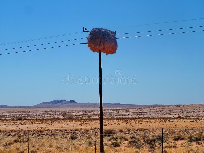 Rede av sällskapliga vävarefåglar fotografering för bildbyråer