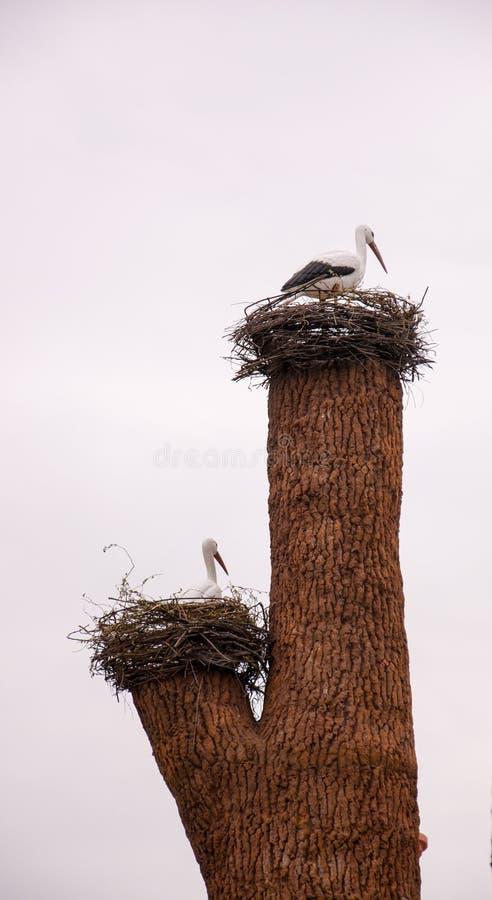 Rede av storkar arkivbild