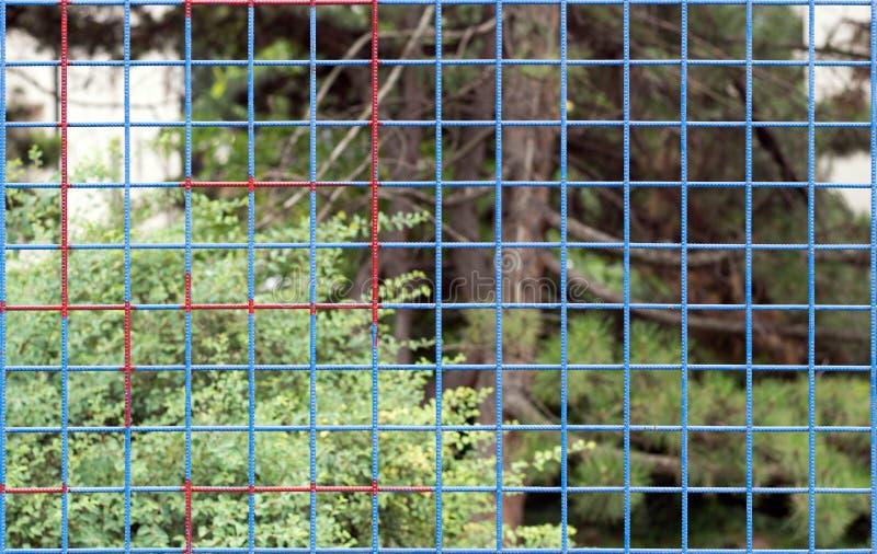 Rede azul e madeiras verdes imagens de stock royalty free