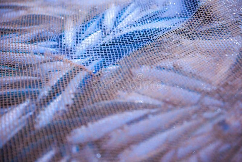 Rede completamente dos peixes imagens de stock