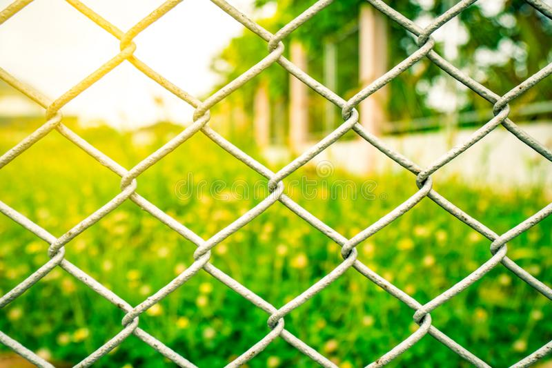 A rede da malha da cerca no campo de flor amarelo borrado fotografia de stock royalty free