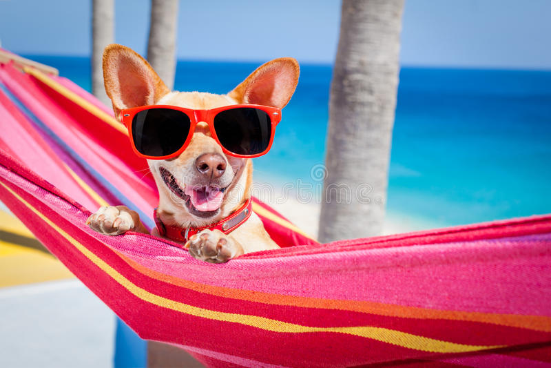 Rede do verão do cão fotografia de stock