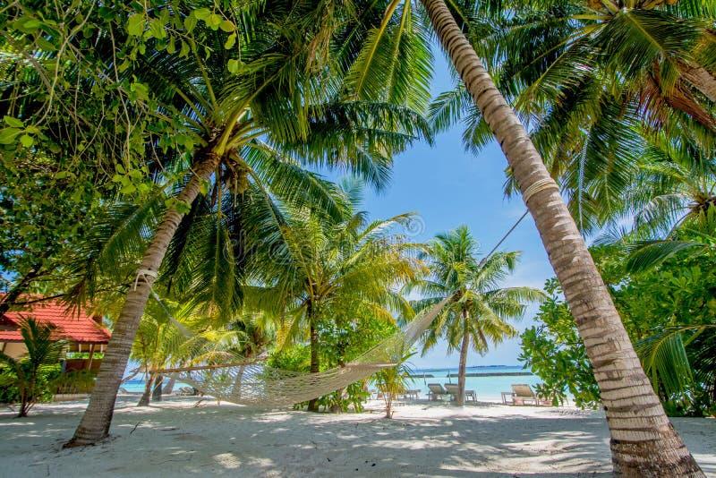 Rede entre duas palmeiras na praia tropical fotografia de stock