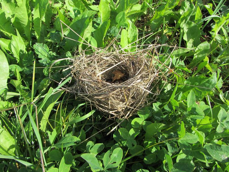 Rede för fågel` s i gräset royaltyfri bild