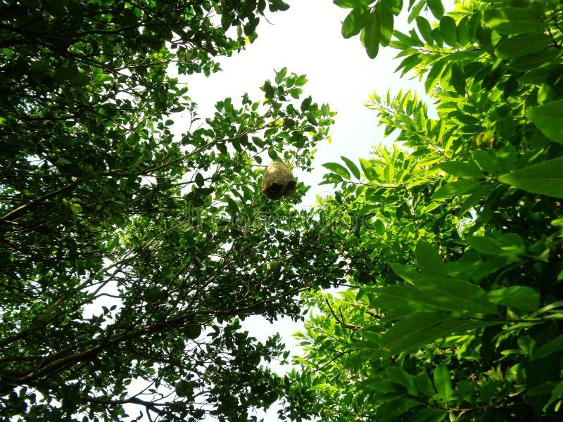 Rede i träd fotografering för bildbyråer
