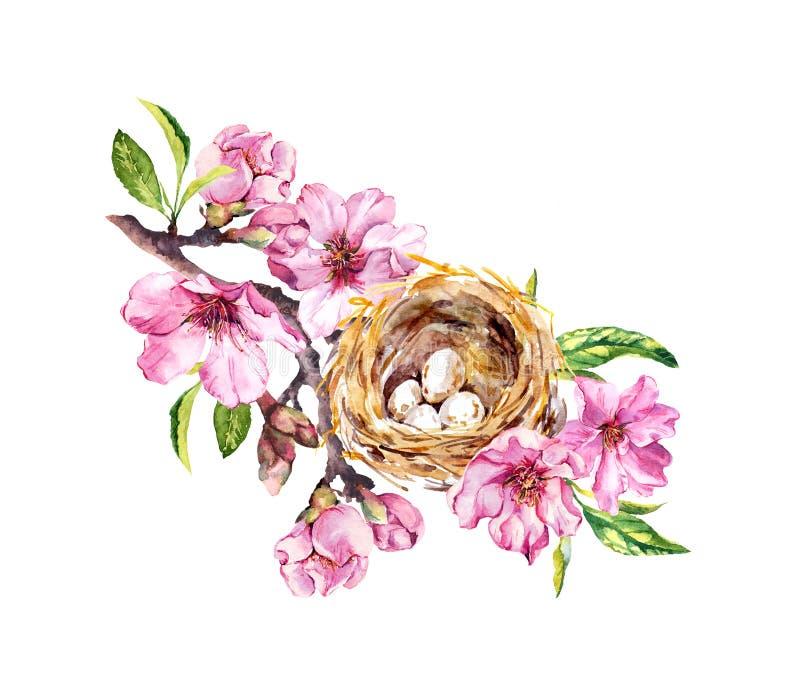 Rede med ägg på den körsbärsröda blomningen, sakura blommor i vårtid Vattenfärgen fattar royaltyfri illustrationer