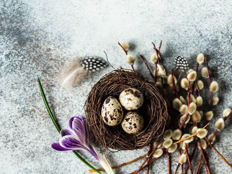 Rede med vaktelägg och fjädrar med pilfilialer och vårblomma på en grå bakgrund Påskferiebegrepp Top beskådar arkivbild