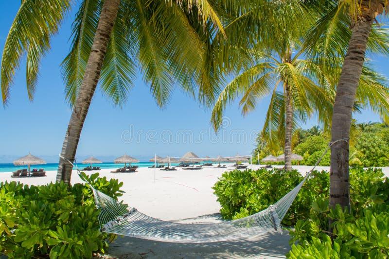 Rede na praia bonita em Maldivas fotografia de stock