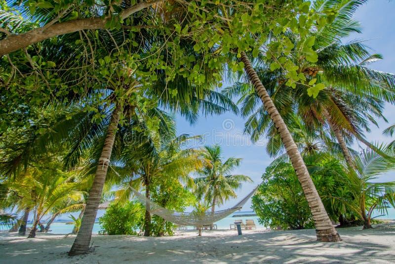 Rede na praia tropical bonita fotografia de stock