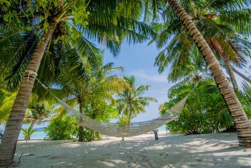Rede na praia tropical bonita em Maldivas fotos de stock royalty free