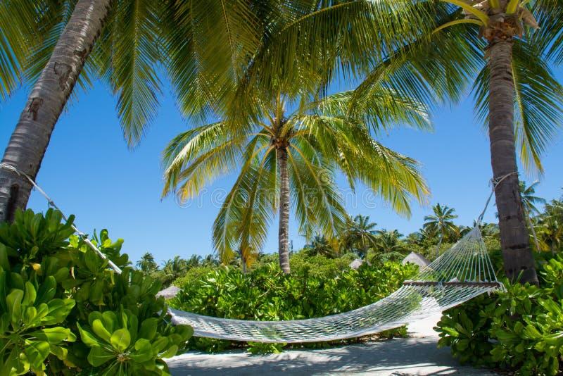 Rede na praia tropical em Maldivas imagem de stock