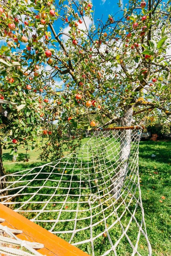 Rede que pendura sob a árvore de Apple com as maçãs vermelhas na jarda da casa rural fotos de stock royalty free