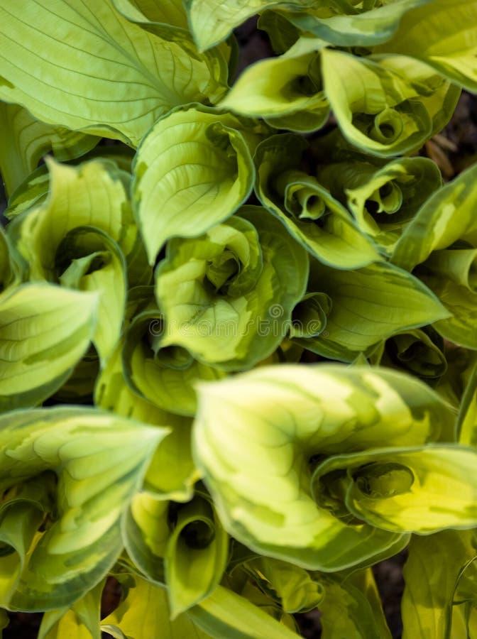 Redemoinho da vegetação foto de stock