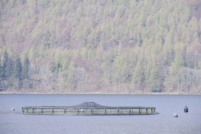 Redes de color salmón de la granja de pescados en el lago Tay Perthsire Scotland del ambiente natural fotografía de archivo libre de regalías