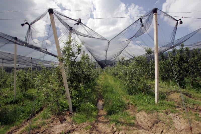 Download Redes Protectoras De Las Huertas Foto de archivo - Imagen de rural, hailstorm: 41906322