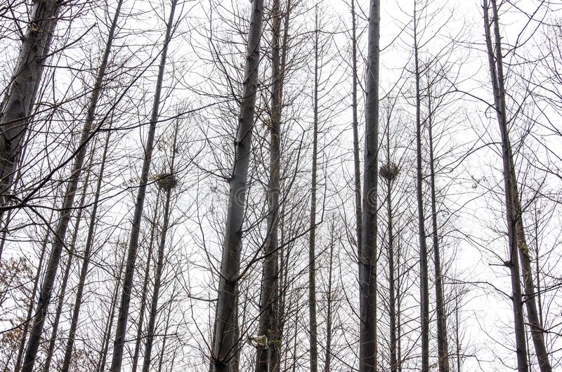 Redet för fågel` s i skogen royaltyfri bild