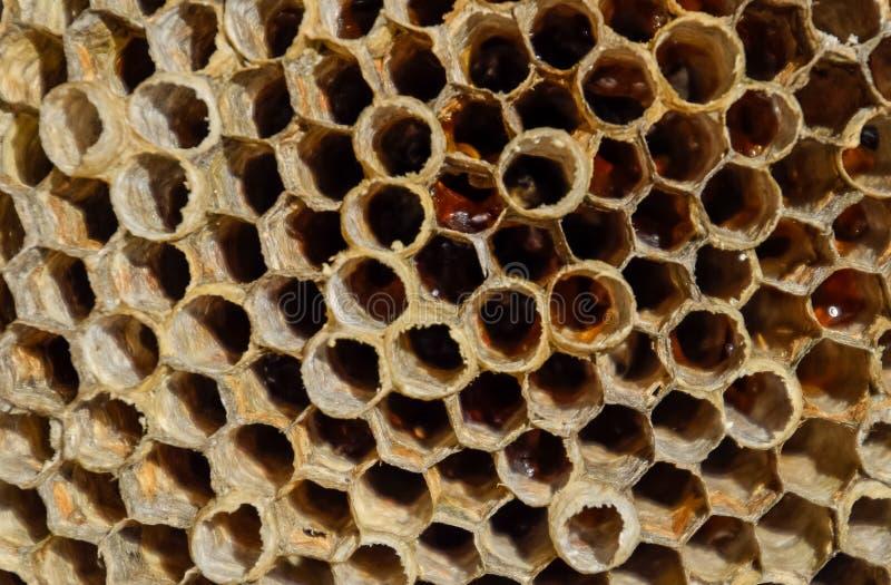 Redet ?r asp-, polisten det asp- redet p? slutet av avels?songen Materiel av honung i honungskakor Asp- honung fotografering för bildbyråer
