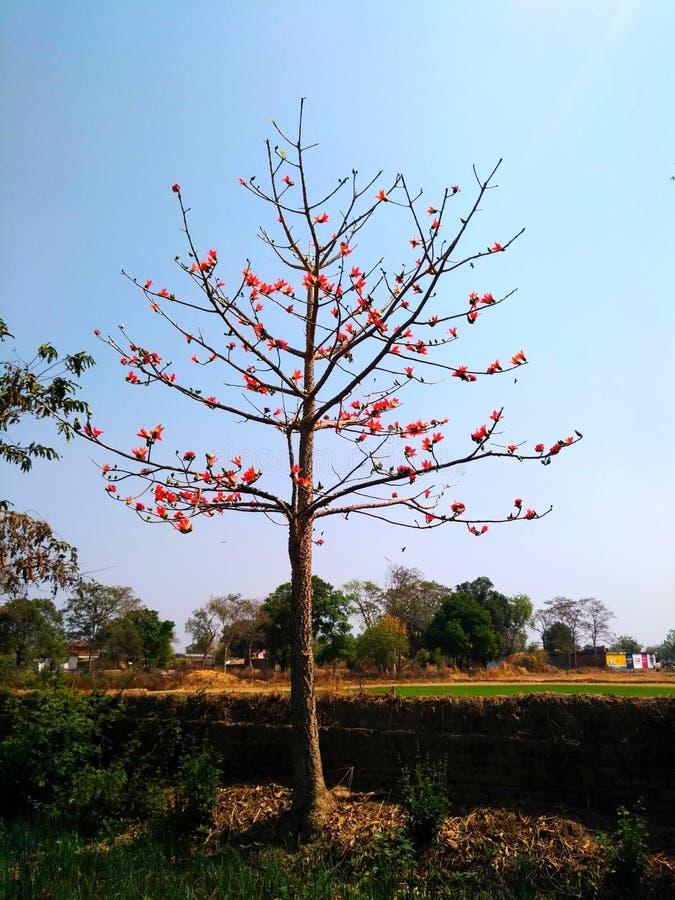 Redflowers van de de herfstboom royalty-vrije stock fotografie