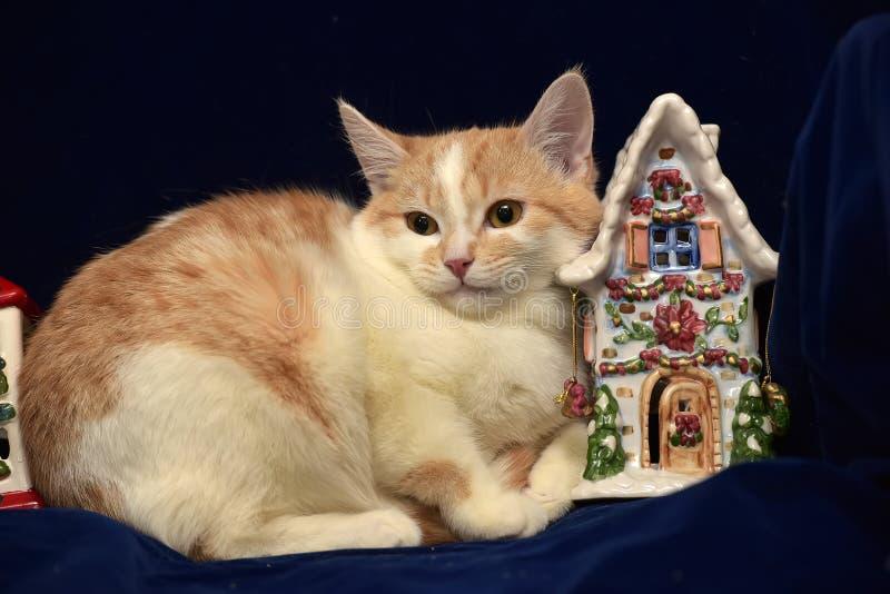 redhead с белым унылым бездомным котенком и рождеством стоковое изображение