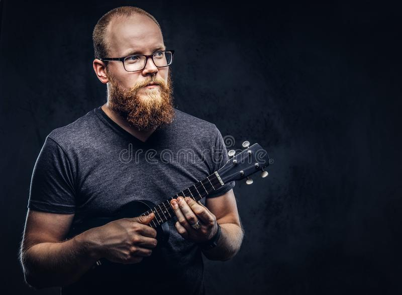 Redhead bearded male musician wearing glasses dressed in a gray t-shirt playing on a ukulele. Isolated on a dark. Redhead bearded male musician wearing glasses stock images