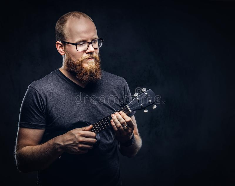 Redhead bearded male musician wearing glasses dressed in a gray t-shirt playing on a ukulele. Isolated on a dark. Redhead bearded male musician wearing glasses stock photography