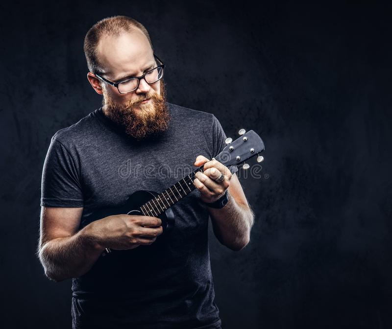 Redhead bearded male musician wearing glasses dressed in a gray t-shirt playing on a ukulele. Isolated on a dark. Redhead bearded male musician wearing glasses royalty free stock photos