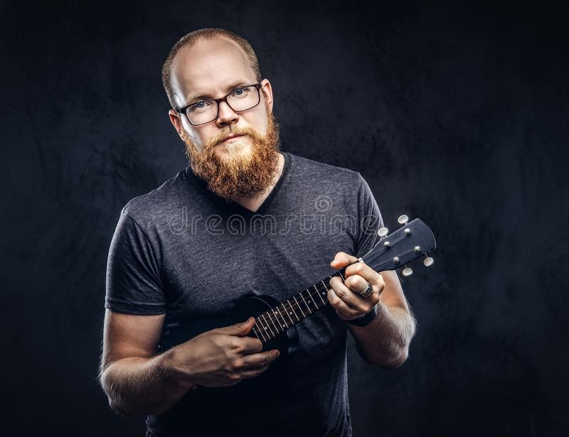 Redhead bearded male musician wearing glasses dressed in a gray t-shirt playing on a ukulele. Isolated on a dark. Redhead bearded male musician wearing glasses royalty free stock photography