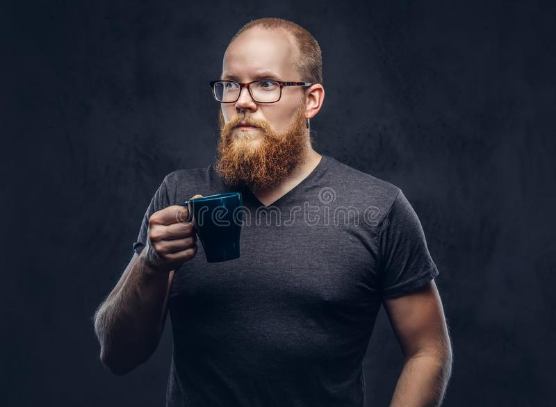 Redhead bearded male standing with a cup of coffee wearing glasses dressed in a gray t-shirt, isolated over a dark. Redhead bearded male standing with cup of royalty free stock photo