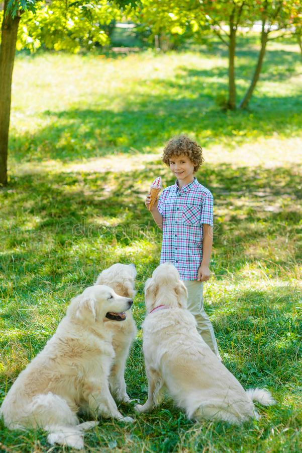 Redhead boy with an ice-cream. Looks right in the camera with a spread smile. Child holds an ice-cream in front of three dogs royalty free stock images