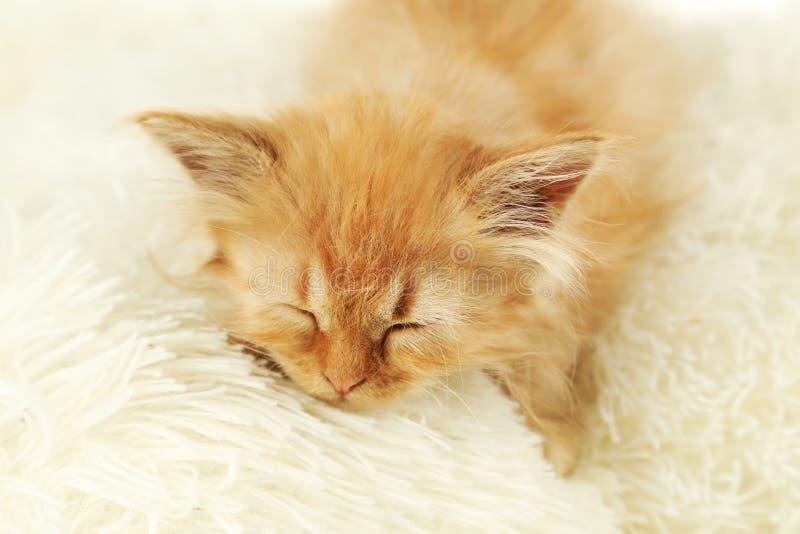 Redhead kitten on white plaid. Redhead kitten on white plaid royalty free stock photo