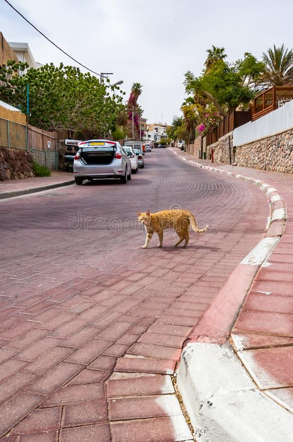 Redhead street cat standing on road in Eilat, Israel. Redhead street cat standing on the road in Eilat, Israel stock photo