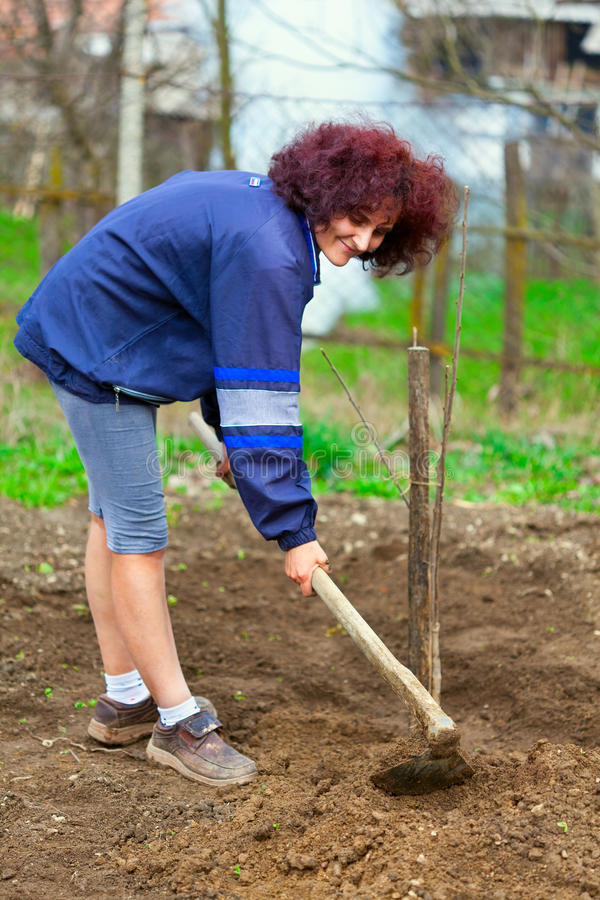 Redhead young lady digging in the garden stock image