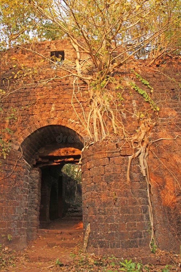 Redi fort Korzenie rośli up z ściana z cegieł f obrazy stock