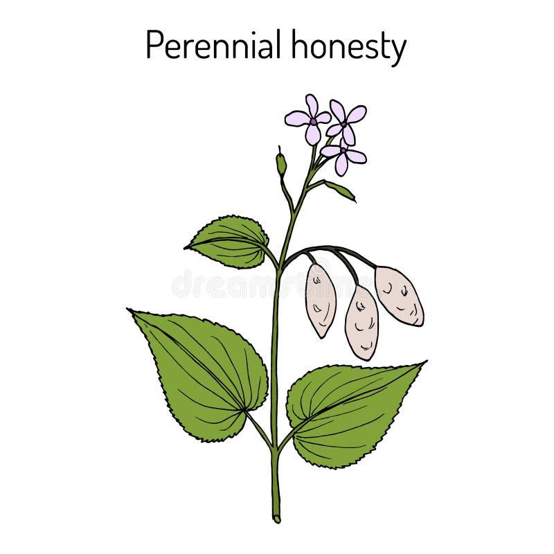 Rediviva perenne del Lunaria de la honradez, planta medicinal stock de ilustración