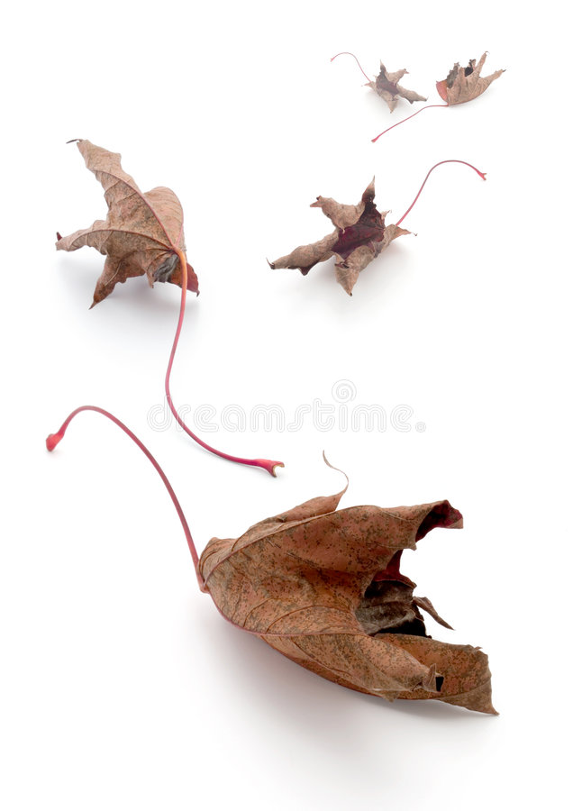Redleaves photographie stock