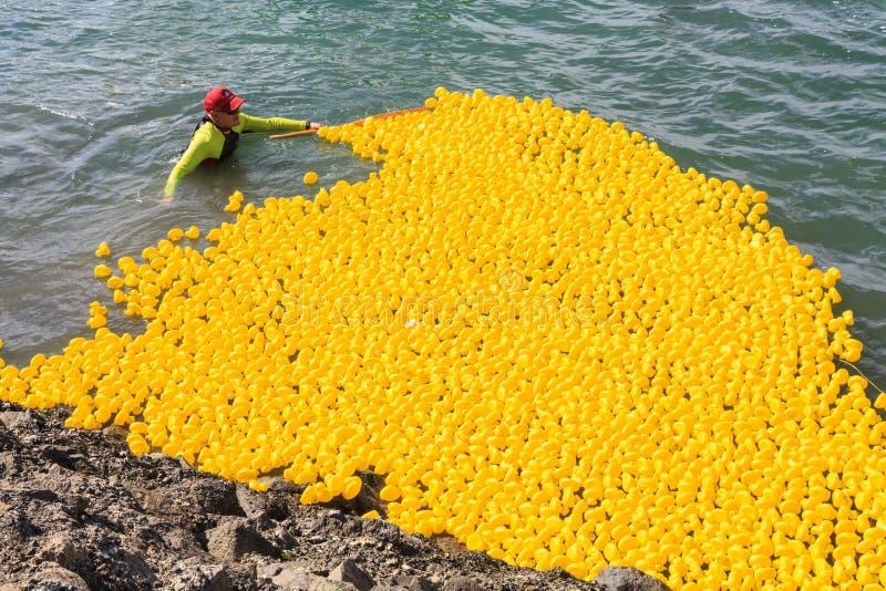 Redondeo encima de millares de patos de goma después de una raza del puerto fotografía de archivo libre de regalías