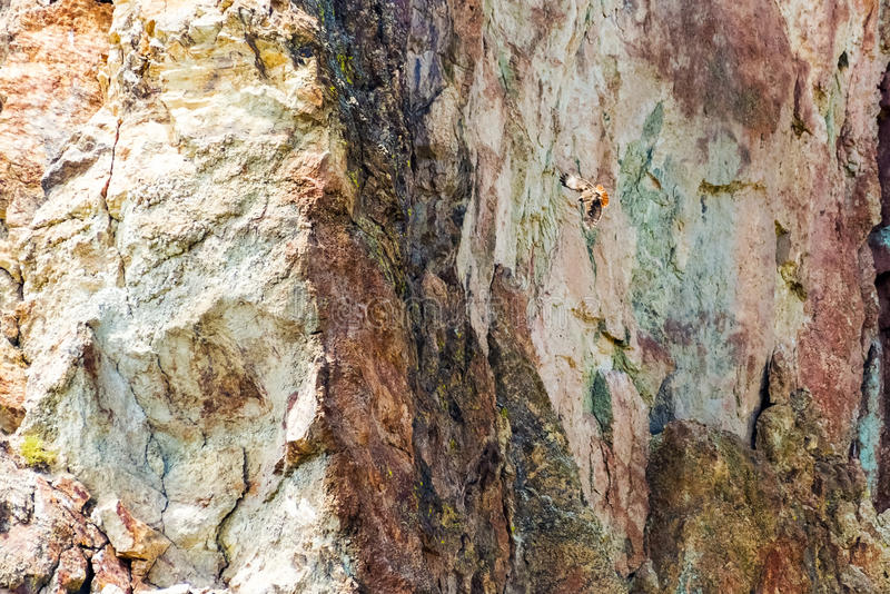 Redtail Hawk Flying Along Mountainside fotos de archivo libres de regalías