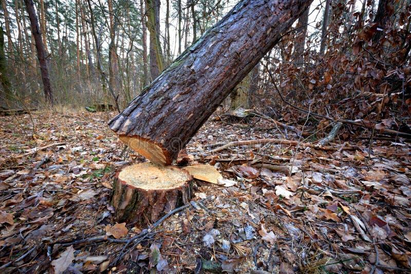Reduza a árvore fotografia de stock