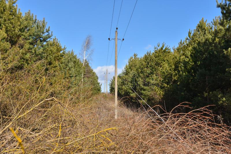 Reduza uma tira na floresta para uma linha elétrica fotos de stock