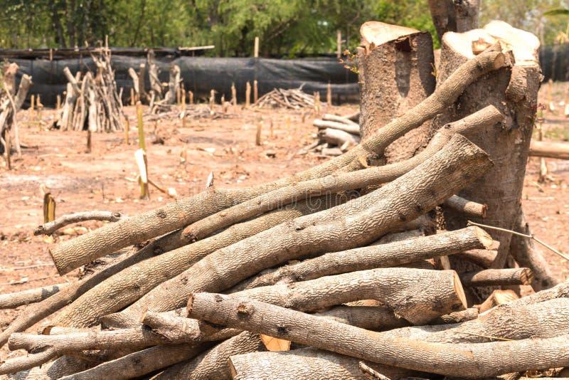 Reduzca los árboles - efectos de los bosques de la destrucción, calentamiento del planeta, foto de archivo libre de regalías