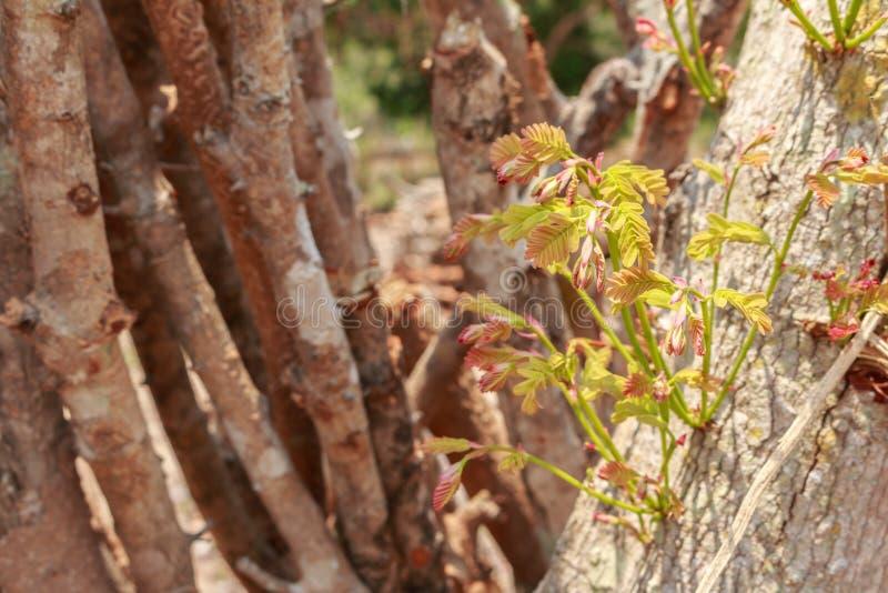 Reduzca los árboles - efectos de los bosques de la destrucción, calentamiento del planeta, imagen de archivo libre de regalías