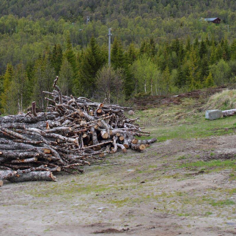 Reduzca los árboles en el bosque fotografía de archivo